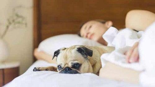 Dormire con il nostro cucciolo.