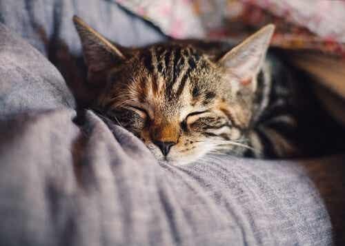 Gatto che dorme sul letto.