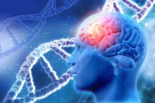 Cervello umano.